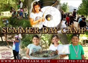 Summer Day Camp 2015