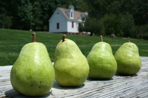 4 pears w privy BG