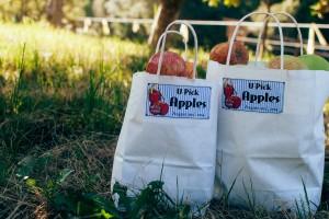 Apples in u-pick bags by Megan Laurie
