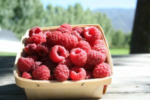 Raspberries half pint w poplars