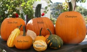 pumpkins_20100923